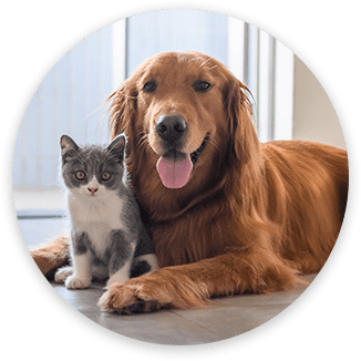 Pet Emergency Vet in Grapevine: Dog and Cat Sitting By Window