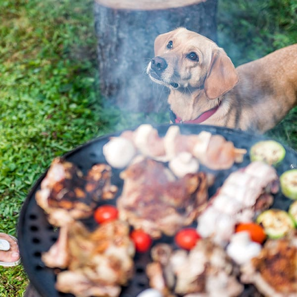 Pet Outdoor Party Safety in Grapevine: Dog Standing By BBQ