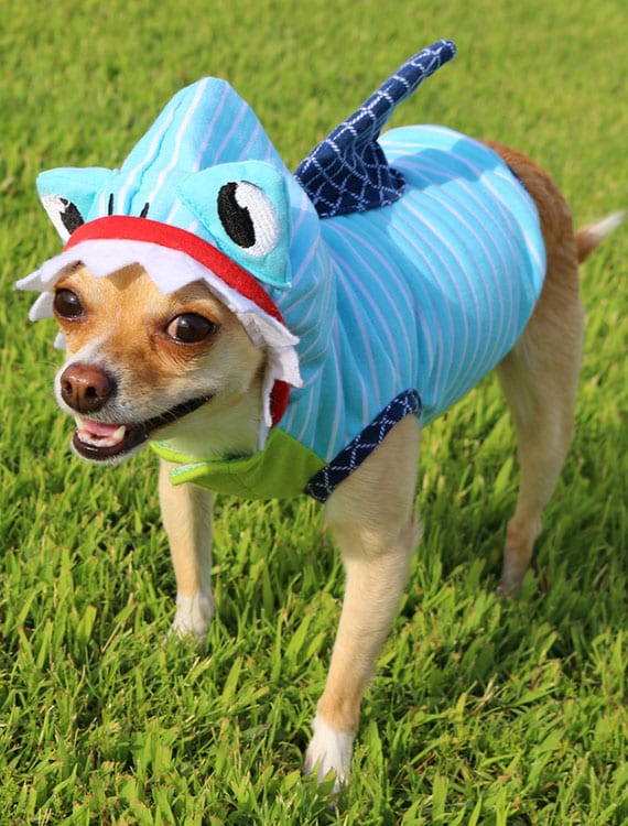 Halloween Pet Safety: Dog Wearing Shark Costume