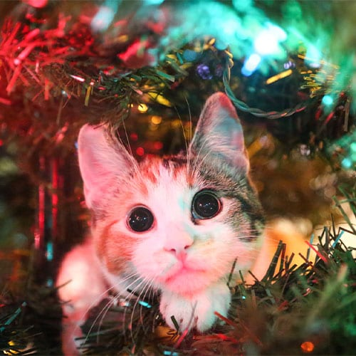 Holiday Pet Safety in Grapevine: A Cat Peeking Out of a Lighted Christmas Tree