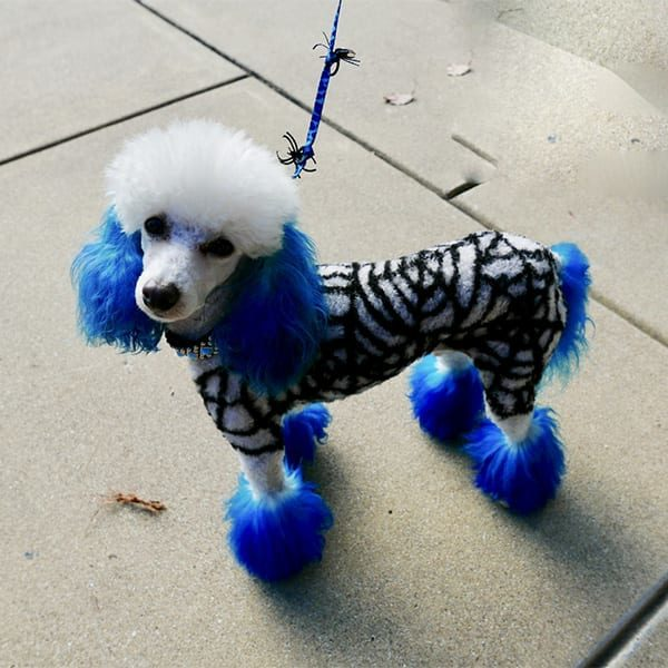 Halloween Pet Safety: Dog With Fancy Haircut