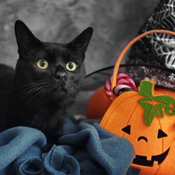 Cute black cat and Halloween decor near grey wall