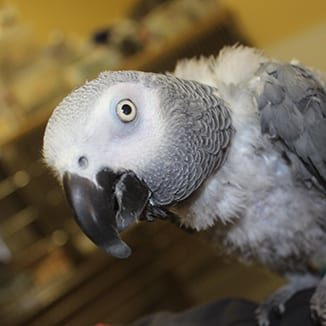 Exotic Pet Care in Grapevine: Bird Peaking Out of Cage